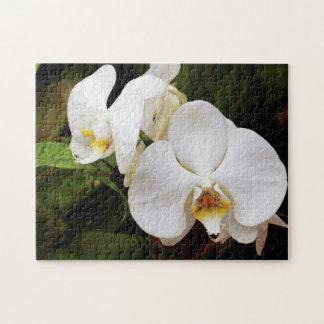White Moon Orchid (Phalaenopsis Aphrodite) Jigsaw Puzzle