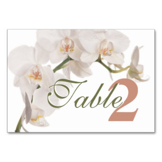 White Moth Orchid Card