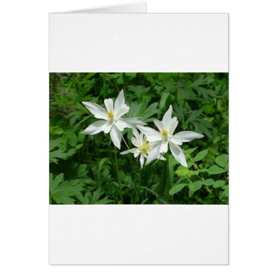 white mountain flower card