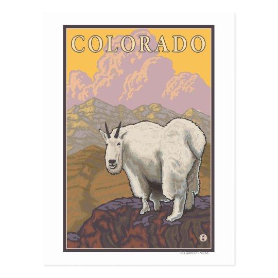 White Mountain GoatColorado Postcard