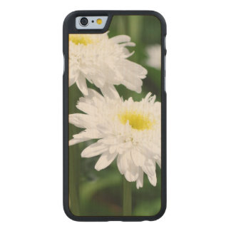 White Mums Carved® Maple iPhone 6 Case