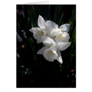 White Narcissus Stationery Note Card