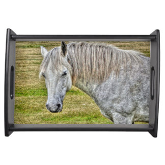 White New Forest Pony Wild Horse Photo Serving Trays