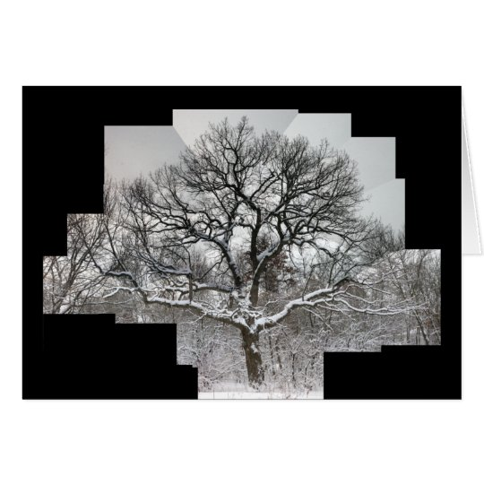 White Oak in Winter Card
