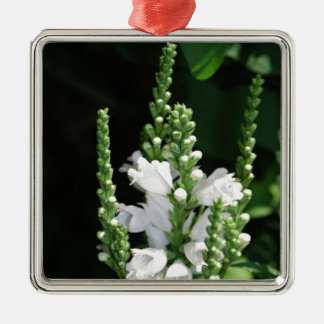 White Obedient Plant Flowers Ornament