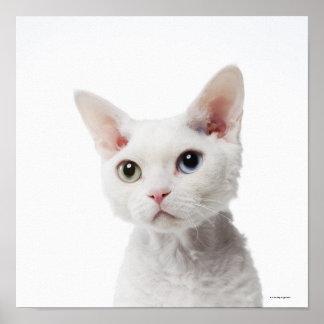 White odd-eyed cat 2 poster