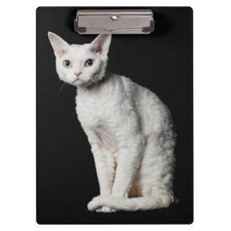 White odd-eyed cat 3 clipboard