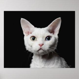 White odd-eyed cat poster