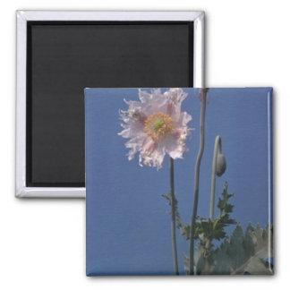 white Opium Poppy Papaver Somniferum flowers Fridge Magnets