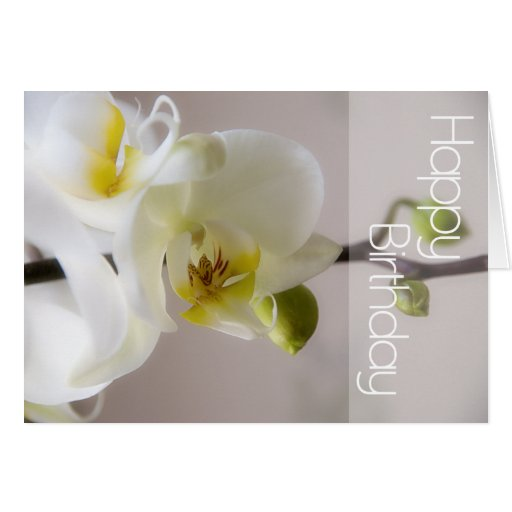 White Orchid Birthday Card