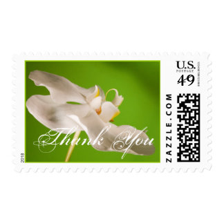 White Orchid Custom Text Wedding Postage Stamp
