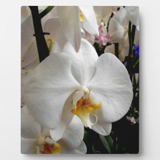 White Orchid Display Plaque