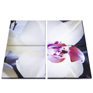 White Orchid Floral Canvas Print