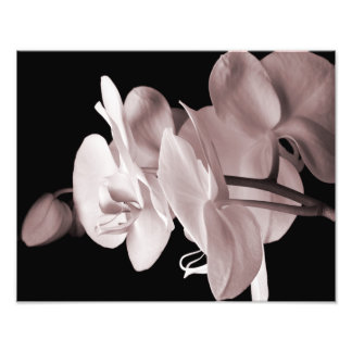 White Orchid Flower Black Background Abstract Art Photo