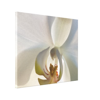 White Orchid Flower Blossom Canvas Print
