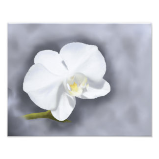 White Orchid Flower Professional Photo Paper