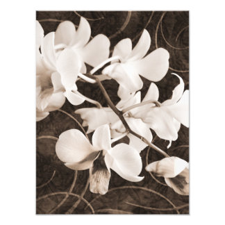White Orchid Flower Sepia Black Background floral Photo