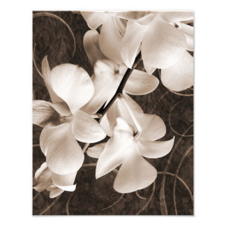 White Orchid Flower Sepia Black Background floral Photo Art