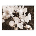 White Orchid Flower Sepia Black Background floral Postcard