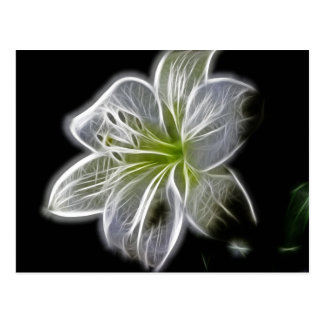 White Orchid Fractal On Black Postcard