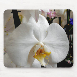 White Orchid Mouse Mat