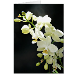 White orchid on black  Birthday Card