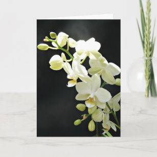 Orchid birthday cards zazzle uk white orchid on black birthday card m4hsunfo
