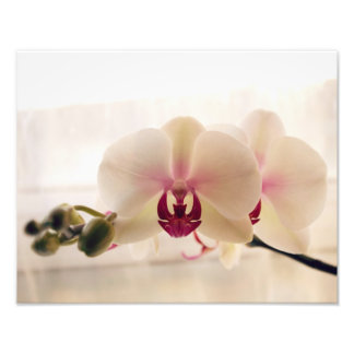 White Orchid Photography Print Photographic Print