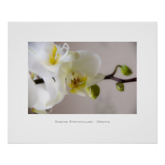 White Orchid • Poster