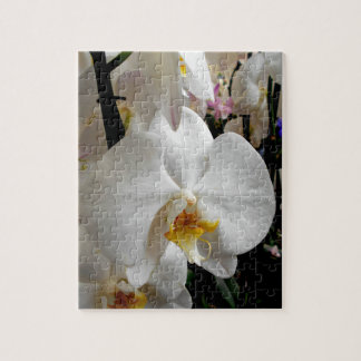 White Orchid Puzzle