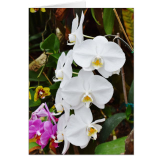 White Orchids Blossoms Card