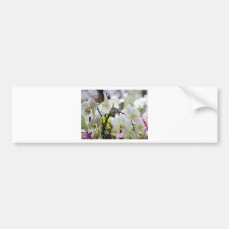 White orchids bumper sticker