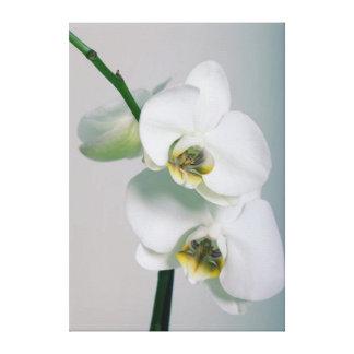 White orchids canvas picture
