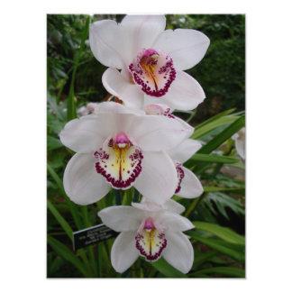 White Orchids Elegant Tropical Flowers Art Photo