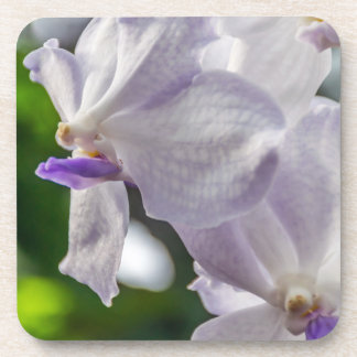 White orchids hard plastic coasters