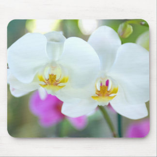 White Orchids Mouse Mat