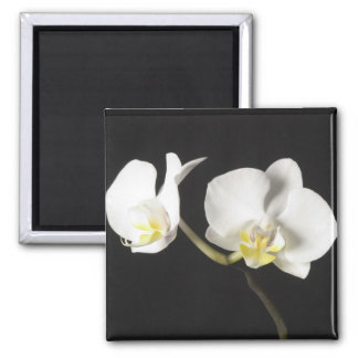 White Orchids Refrigerator Magnet
