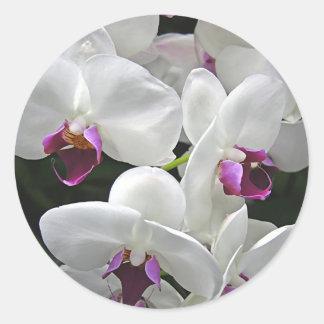 White Orchids Round Sticker