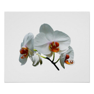 White Orchids With Orange Cen Poster