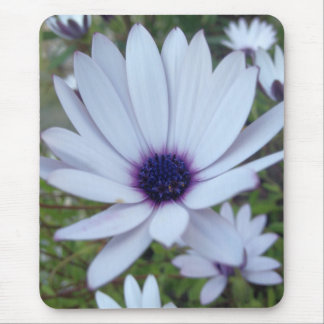 White Osteospermum Flower Daisy With Purple Hue Mouse Pad