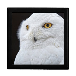 White Owl Gift Box