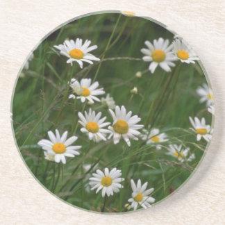 white Oxeye daisy flowers Coaster