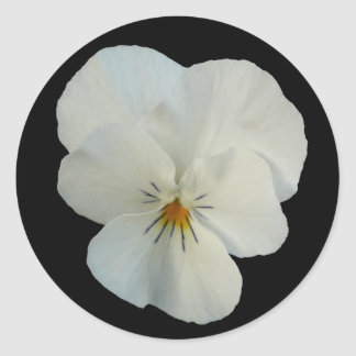 white pansy classic round sticker