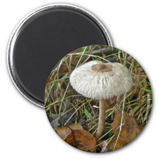 White Parasol Mushroom Coordinating Items 6 Cm Round Magnet