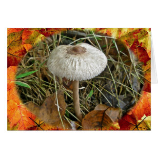 White Parasol Mushroom Coordinating Items Greeting Card