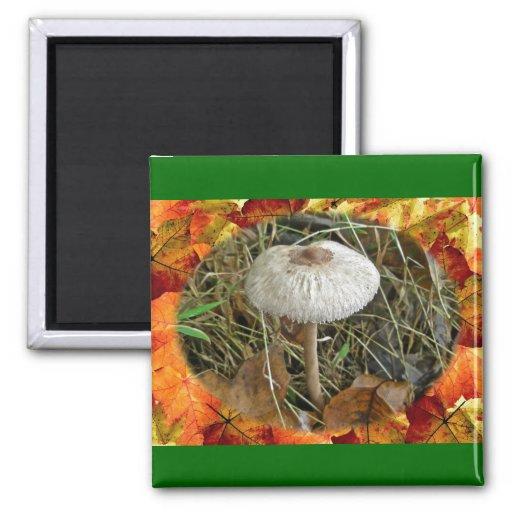 White Parasol Mushroom Coordinating Items Magnets