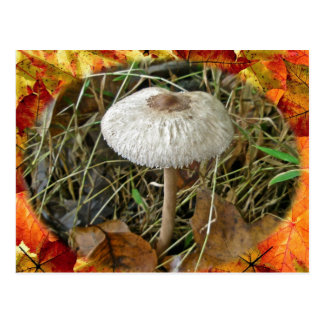 White Parasol Mushroom Coordinating Items Postcard