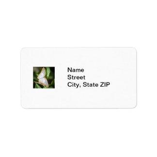 White Peacock Anartia Jatrophae Address Label