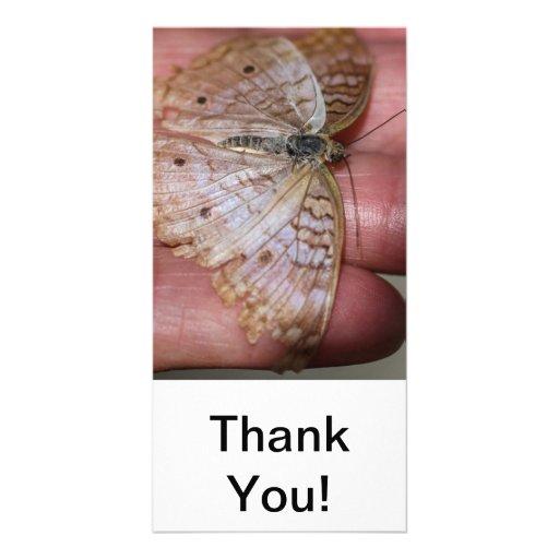 White Peacock Anartia Jatrophae Personalized Photo Card
