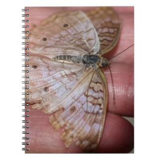 White Peacock Anartia Jatrophae Spiral Note Books